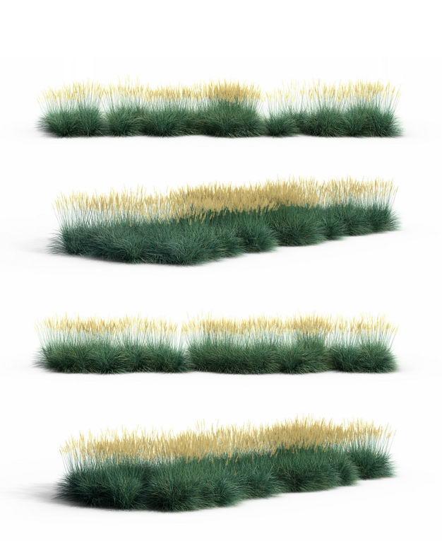 四款3D渲染的蓝羊茅野草草丛园艺绿植观赏植物807900免抠图片素材