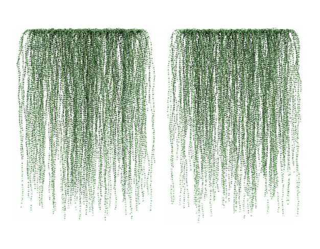 两款3D渲染的千叶兰观叶植物吊兰绿植观赏植物256943免抠图片素材