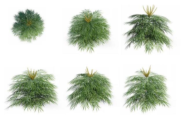 六款3D渲染的袖珍椰子盆栽园艺绿植观赏植物166615免抠图片素材 生物自然-第1张