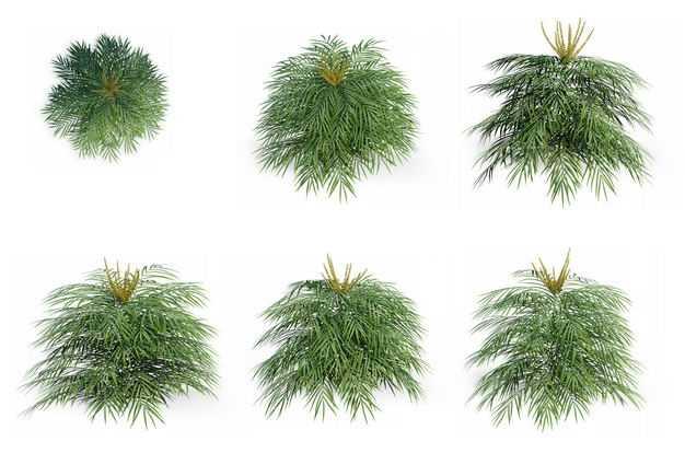 六款3D渲染的袖珍椰子盆栽园艺绿植观赏植物166615免抠图片素材