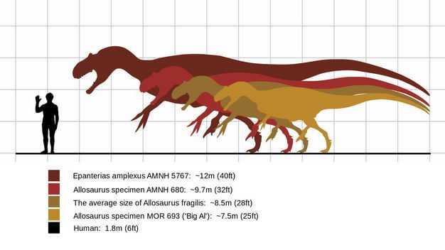 各种暴龙科恐龙和人类大小对比图2209255png图片免抠素材