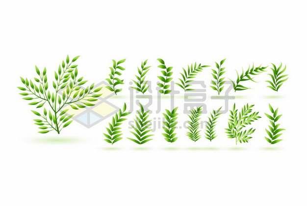 各种绿色树叶装饰141528图片素材