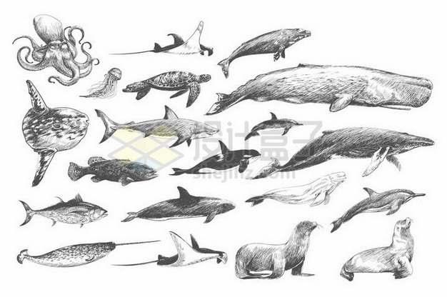章鱼蝠鲼魔鬼鱼海豹翻车鱼海龟水母抹香鲸鲨鱼虎鲸海狮独角鲸等海洋动物黑白插画847240png矢量图片素材