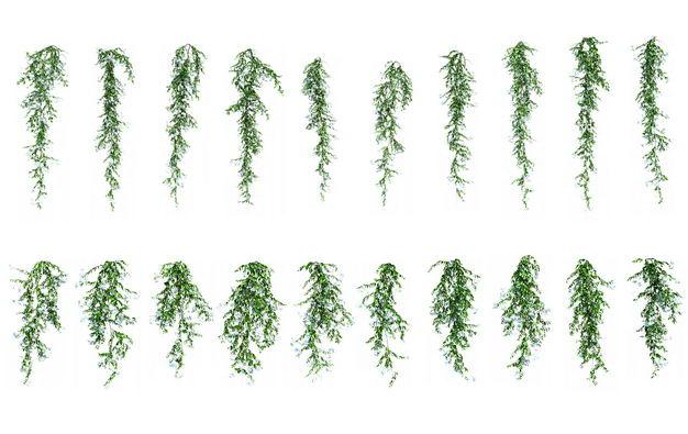 各种下垂的树叶绿植观赏植物867108免抠图片素材 生物自然-第1张