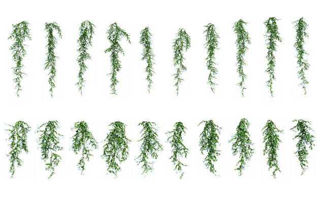 各种下垂的树叶绿植观赏植物867108免抠图片素材