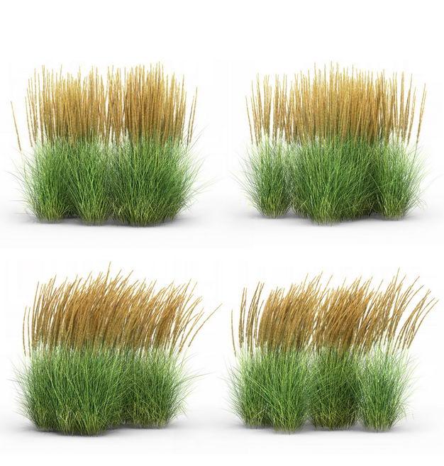 四款3D渲染的蒲苇羽毛芦苇草草丛园艺绿植观赏植物510498免抠图片素材 生物自然-第1张