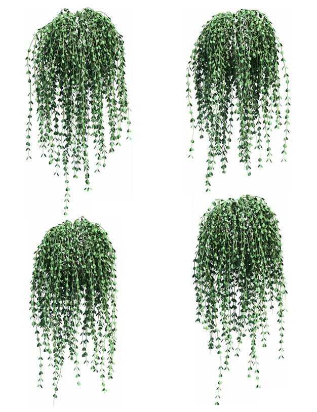 四款3D渲染的马蹄金吊兰绿植观赏植物469903免抠图片素材