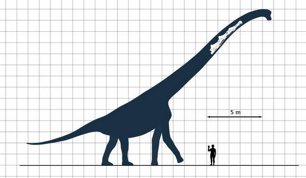 腕龙雷龙泰坦巨龙恐龙和人类大小对比图1556322png图片免抠素材 生物自然-第1张