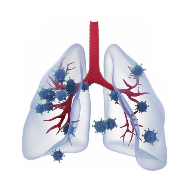 3D立体风格淡蓝色半透明肺部和新型冠状病毒747792png图片素材