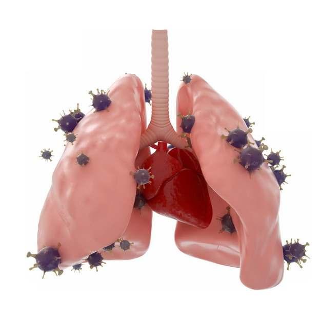 3D立体风格肉色的肺部和新型冠状病毒934608png图片素材