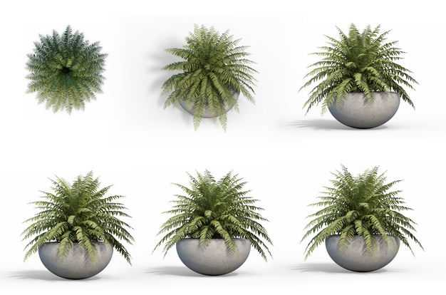 六款3D渲染的肾蕨盆栽绿植观赏植物979334免抠图片素材