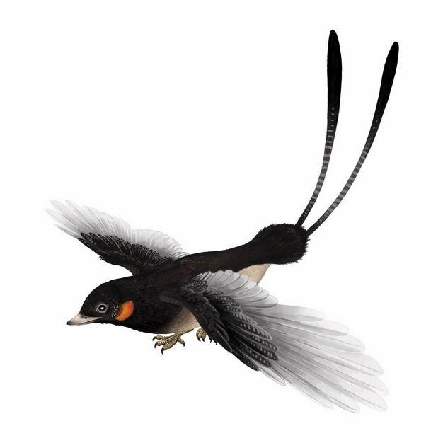 孔子鸟已灭绝鸟类复原图9480892png图片免抠素材