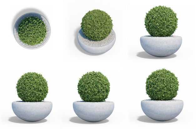 六款3D渲染的黄杨树盆栽绿植观赏植物749715免抠图片素材