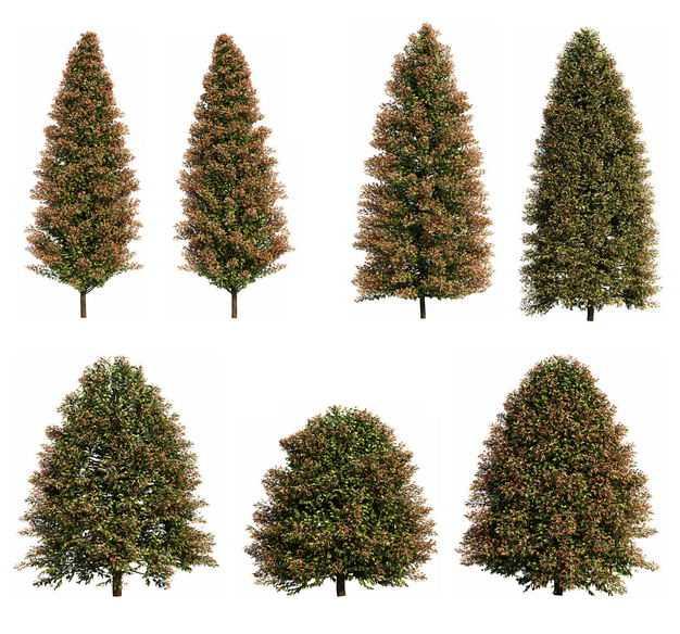 七款3D渲染的黑杨树美洲椴绿色大树641155免抠图片素材