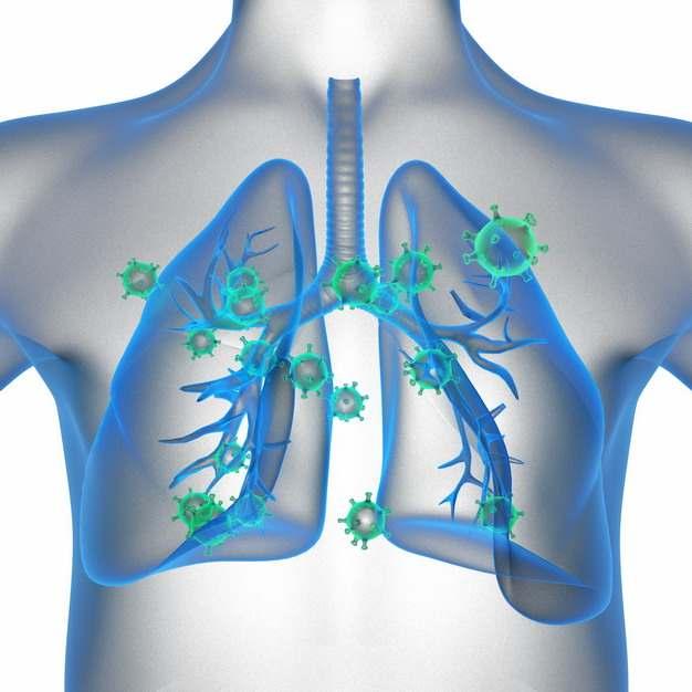 3D立体风格人体解剖图中蓝色半透明肺部和绿色新型冠状病毒116559png图片素材