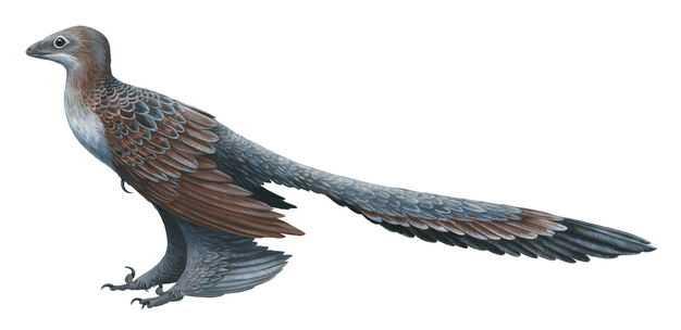 长羽盗龙驰龙科恐龙小盗龙类复原图4672288png图片免抠素材