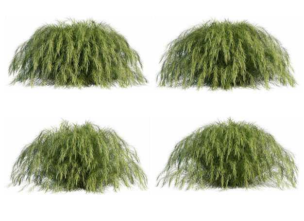 四棵3D渲染的地肤灌木丛盆栽植物盆景469556PSD免抠图片素材
