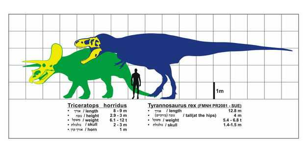 暴龙霸王龙和三角龙和人类大小对比图3465700png图片免抠素材