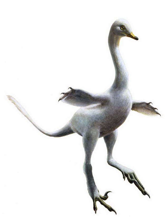 晚白垩纪哈兹卡盗龙驰龙科肉食性恐龙复原图4395781png图片免抠素材