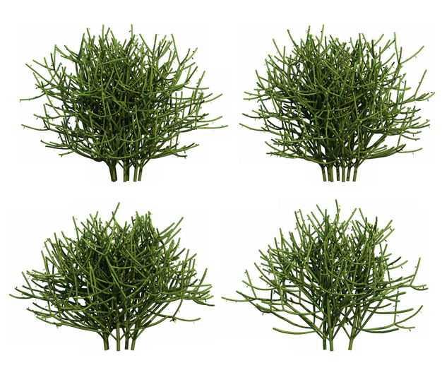 四款3D渲染的浓密绿玉树大戟科绿植观赏植物714410免抠图片素材