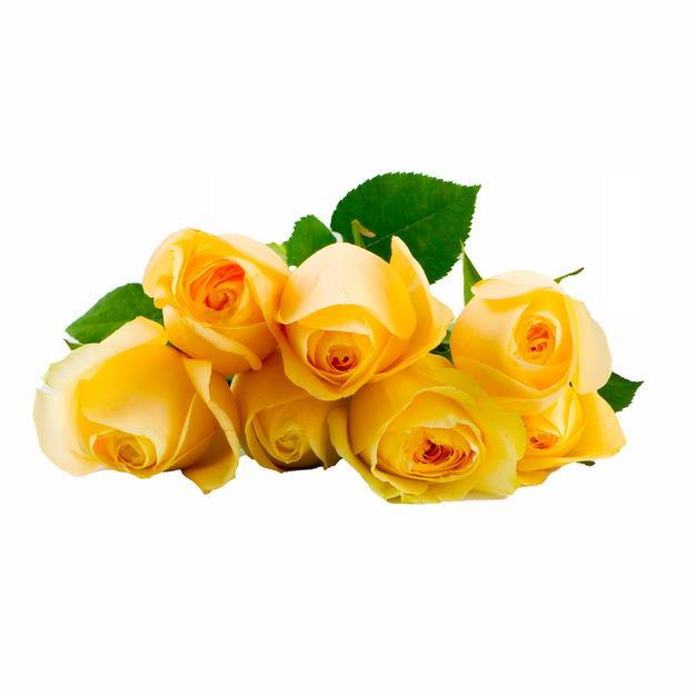 放在地上的一束黄玫瑰花鲜花黄色花朵249999png图片免抠素材