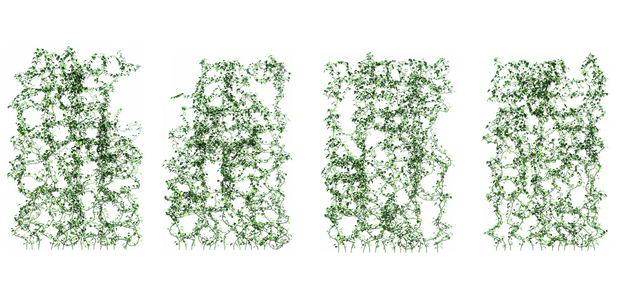 四款创意爬山虎组成的植物墙100432免抠图片素材 生物自然-第1张
