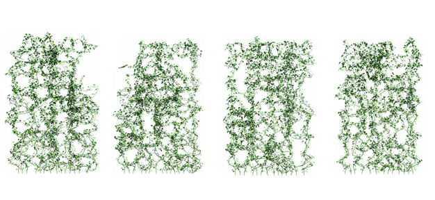 四款创意爬山虎组成的植物墙100432免抠图片素材