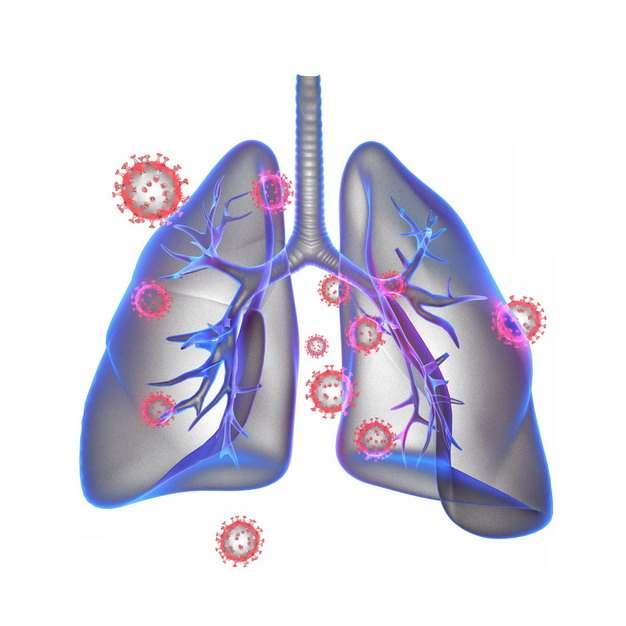 3D立体风格紫色半透明肺部和新型冠状病毒939751png图片素材