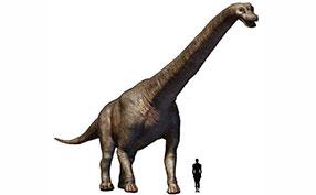 恐龙和人类大小对比图片素材
