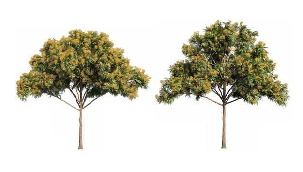 两款3D渲染的凤凰木栾树绿植观赏植物176370免抠图片素材