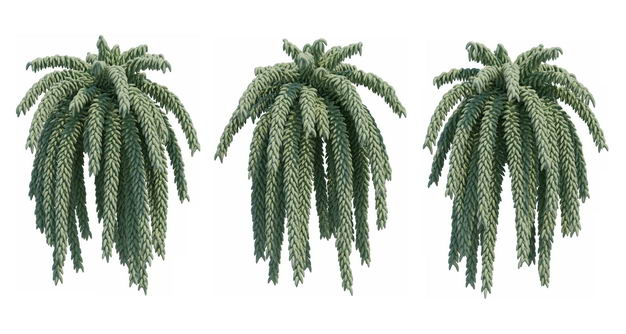 三款3D渲染的翡翠景天串珠草绿植观赏植物299565免抠图片素材