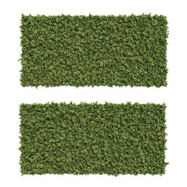 两款3D渲染的方形龟甲冬青盆栽园艺绿植灌木丛观赏植物700837免抠图片素材