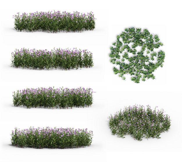 3D渲染的蓝花草花丛草丛绿植观赏植物224814免抠图片素材