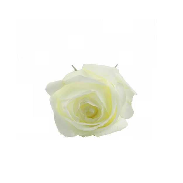 一朵白玫瑰花朵花卉白色花朵756431png图片免抠素材