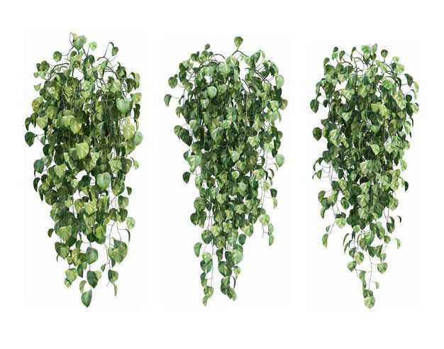 三款3D渲染的常春藤绿萝观叶植物盆栽植物盆景178143PSD免抠图片素材