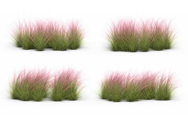 四款3D渲染的细茎针茅野草草丛园艺绿植观赏植物764099免抠图片素材