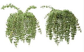 3D渲染植物图片素材