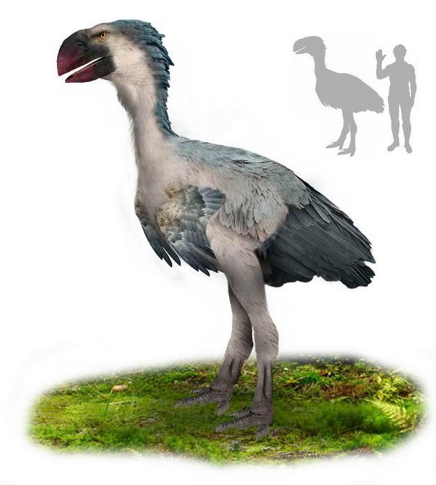 骇鸟古新世南美洲灭绝肉食性鸟类复原图和人类大小对比图4525475png图片免抠素材 生物自然-第1张