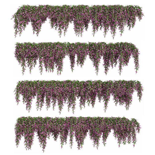 四款3D渲染的紫藤盆栽绿植观赏植物6032697png图片免抠素材
