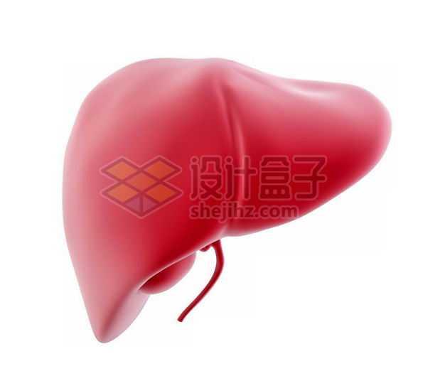 3D立体红色肝脏等内脏塑料人体模型7766021免抠图片素材