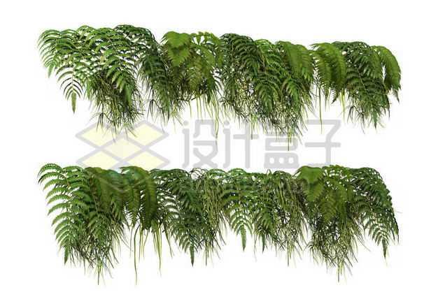 两款各种热带树叶蕨类叶子装饰9106721图片免抠素材