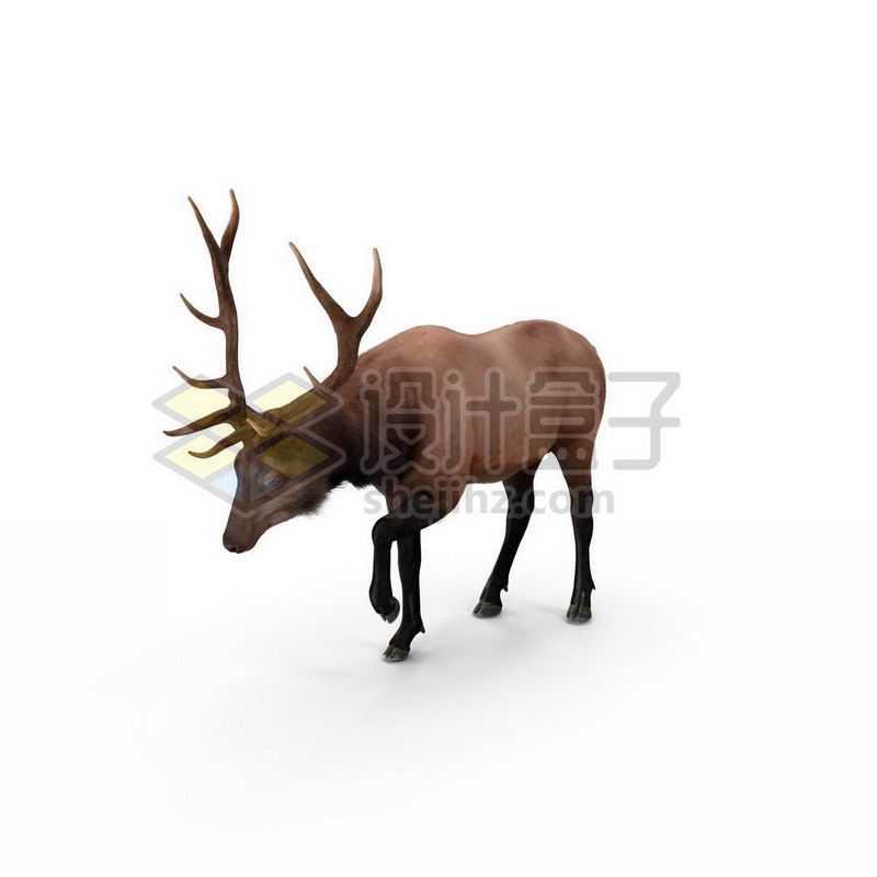 3D立体高清驯鹿野生动物2520577图片免抠素材