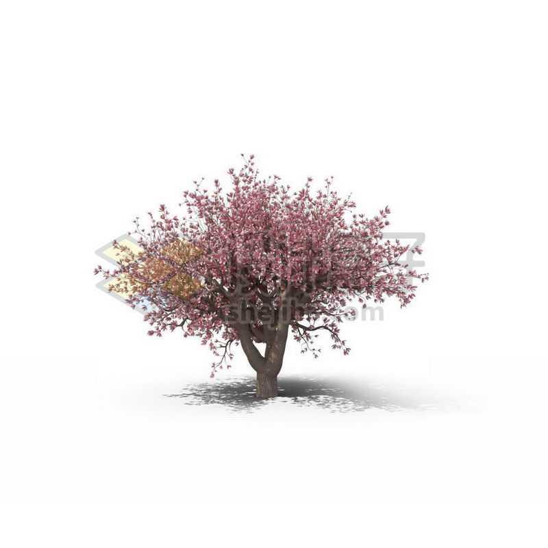 一棵粉红色的碧桃树景观树木大树9655717图片免抠素材