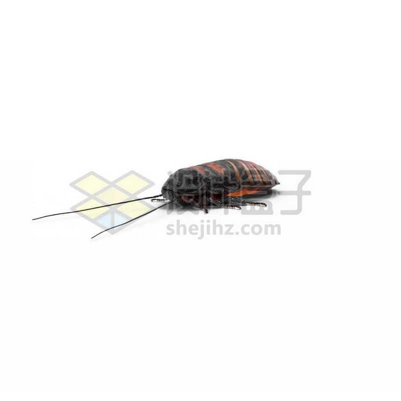 3D立体高清土鳖虫小动物6322455图片免抠素材