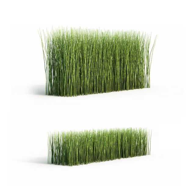 两款3D渲染的木贼观叶植物绿植观赏植物9586211png图片免抠素材