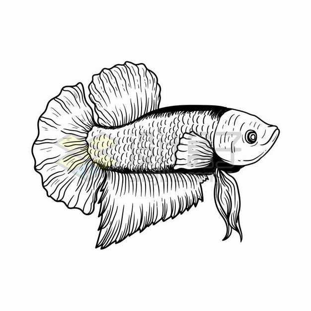 手绘线条风格泰国斗鱼1342424png图片免抠素材