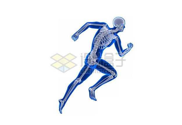 3D立体蓝色人体模型和骨骼骨架奔跑模型7887648免抠图片素材