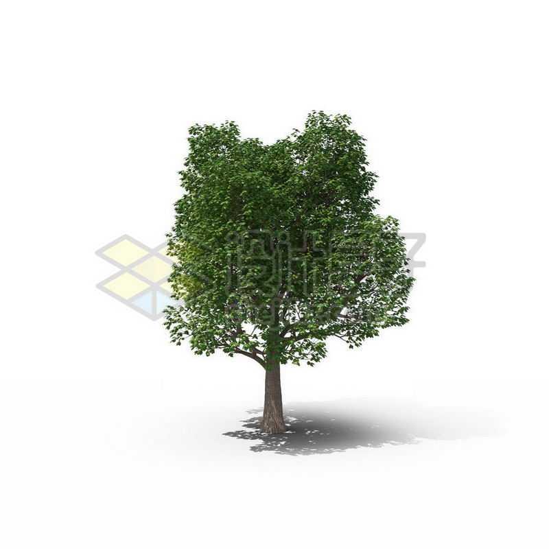 一棵春天夏天的杨树景观树木绿色大树2387742图片免抠素材