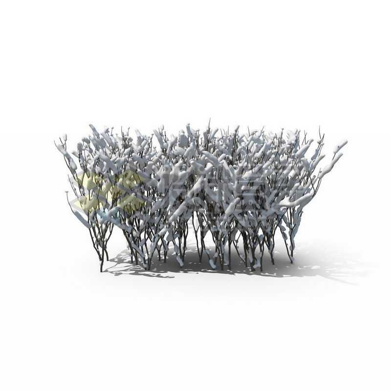 冬天一丛干枯的灌木丛上的积雪6730559图片免抠素材