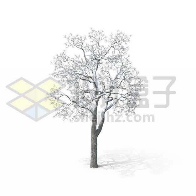 冬天下雪后的落满积雪的大树5123948图片免抠素材